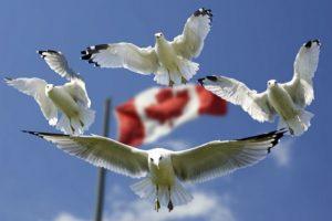 gulls-540791_1280